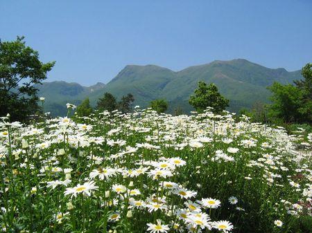 花畑とくじゅう連山