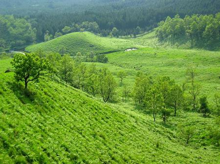 阿蘇_新緑の草原