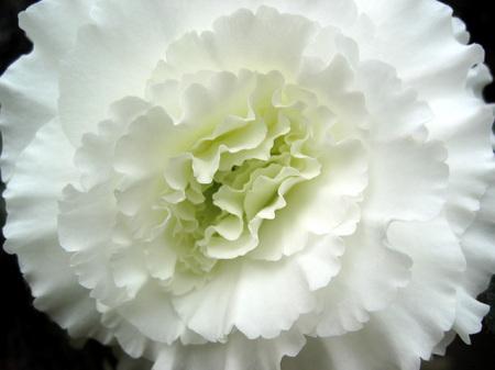 松江イングリッシュガーデン_温室の花々