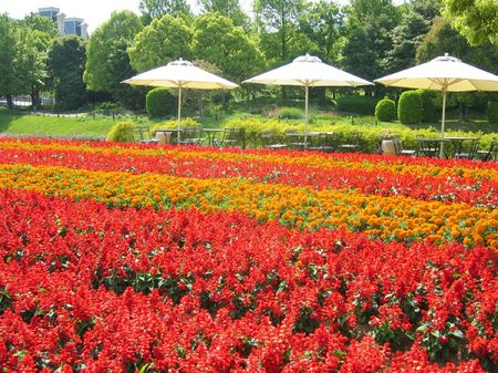 ハウステンボス_キンデルダイクの花畑