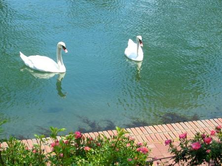 ハウステンボス_運河を泳ぐ白鳥