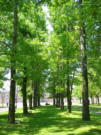 パレスハウステンボス前庭の並木