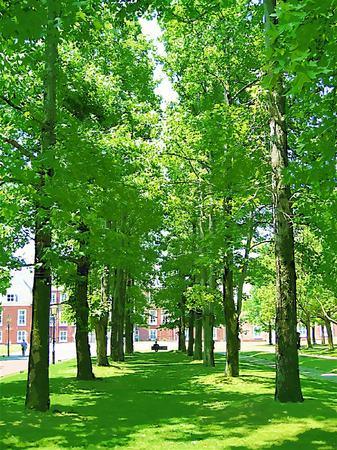 パレスハウステンボス前庭の並木(ガッシュ風)