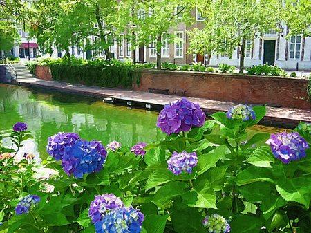 ハウステンボス_アムステル川沿いの紫陽花(油絵風)