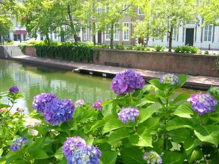 ハウステンボス_アムステル川沿いの紫陽花