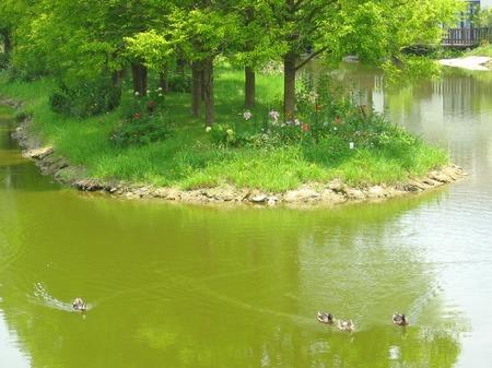 ハウステンボス_フォレストパークの鴨たち