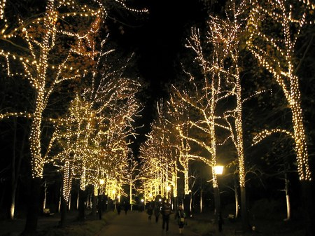 ハウステンボス_パレスへの並木道
