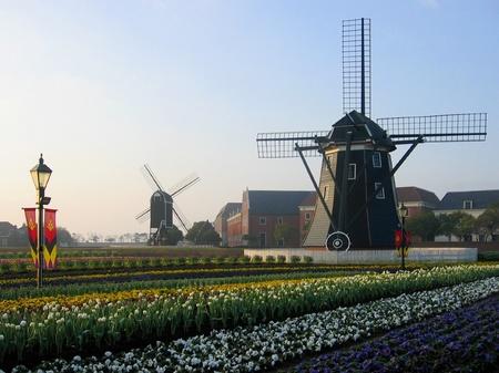 ハウステンボス_朝の花畑と風車