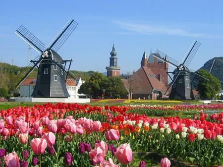 ハウステンボス_チューリップ畑と風車
