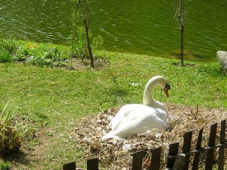 ハウステンボス_卵を抱く白鳥