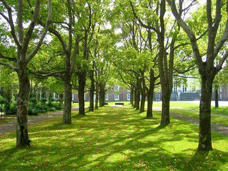 ハウステンボス_パレス前庭の新緑