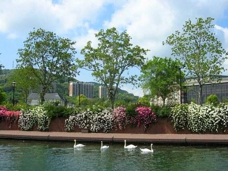 ハウステンボス_シンゲル運河沿いのバラ