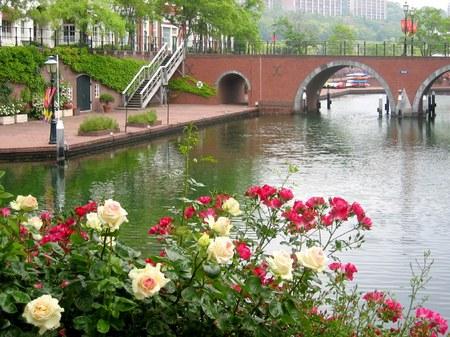 ハウステンボス_バラと橋のある朝の風景