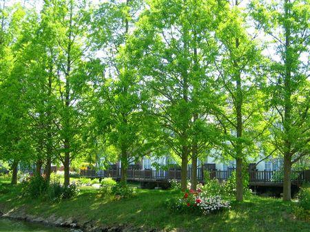 ハウステンボス_初夏のフォレストパーク