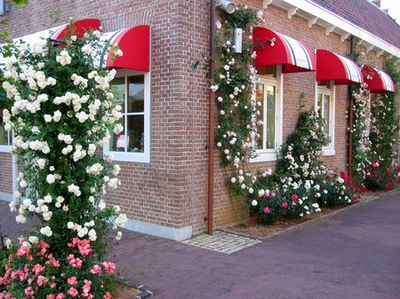 ハウステンボス_バラの咲くビネンスタッドの街角