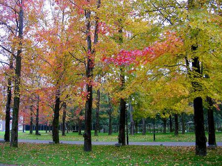 ハウステンボス_パレス前庭の紅葉