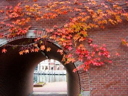 ハウステンボス_橋のレンガに紅葉した蔦