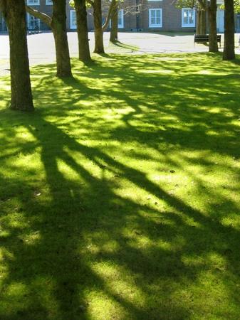 ハウステンボス_冬の木漏れ日