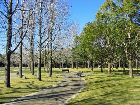 ハウステンボス_パレス前庭の冬木立