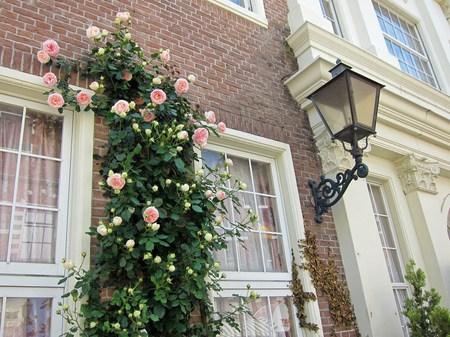 ハウステンボス_モンドリアーン通りのバラ