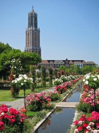ハウステンボス_カスケードガーデンのバラ