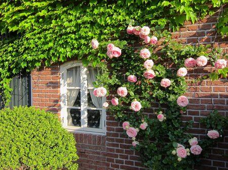 ハウステンボス_運河テラスのバラ