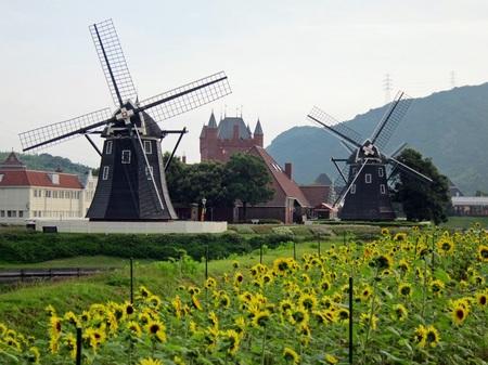 ハウステンボス_ひまわり畑と風車