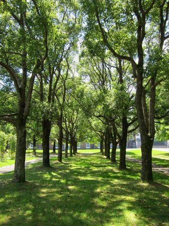 ハウステンボス_木漏れ日の揺れる木陰