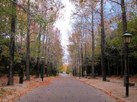 ハウステンボス_落ち葉の並木道