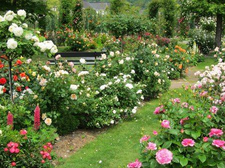 ハウステンボス_アートガーデンに咲き乱れるバラ
