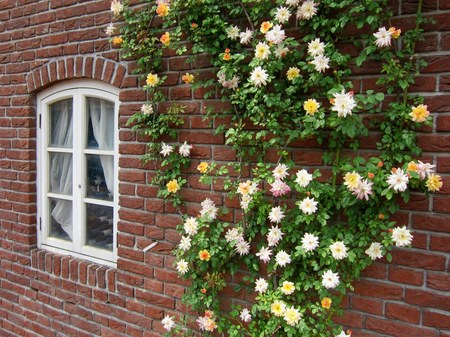 ハウステンボス_ユトレヒトの運河テラスに咲くバラ