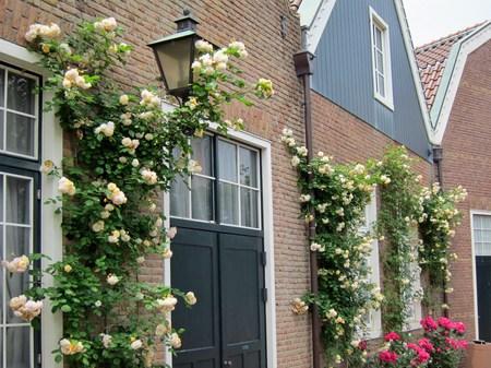 ハウステンボス_フェルメール通りのバラ