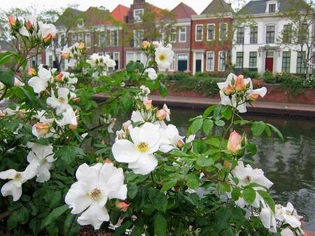 ハウステンボス_夕刻の運河に咲くバラ