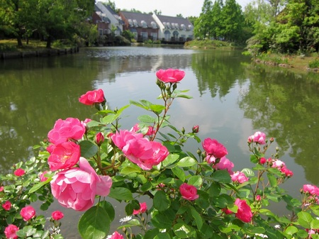 ハウステンボス_バラの咲く湖畔