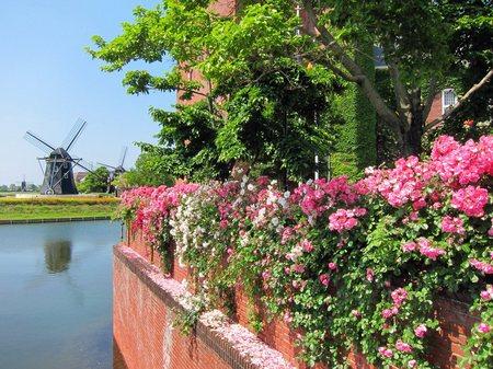 ハウステンボス_ナイアンローデ城のバラと風車
