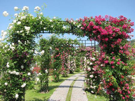 ハウステンボス_バラの花回廊
