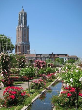 ハウステンボス_カスケード沿いに咲くバラ