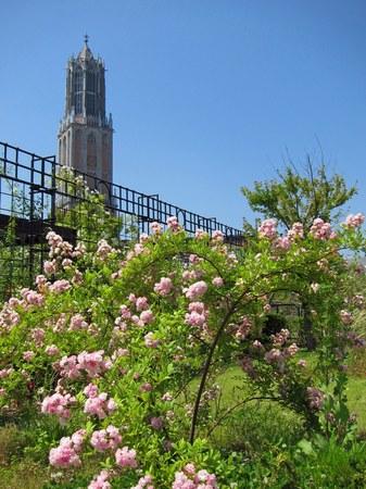 ハウステンボス_アートガーデンのバラとドムトールン