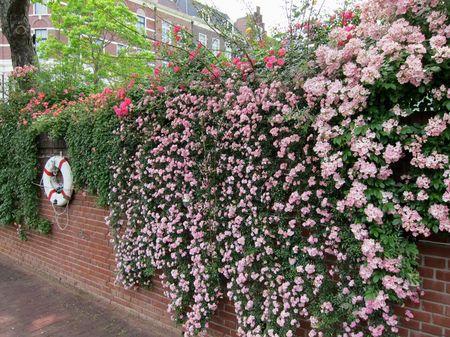 ハウステンボス_運河テラスを彩るバラのカーテン