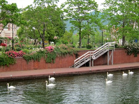 ハウステンボス_運河を泳ぐ白鳥たち